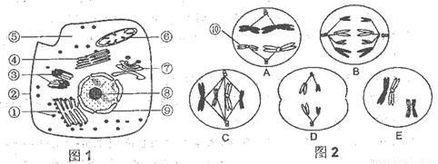 下图1是高等动物细胞亚显微结构模式图
