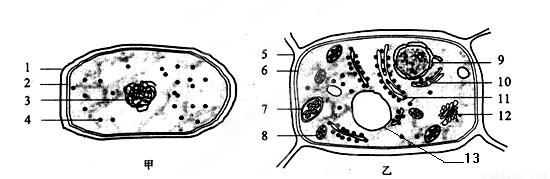 """细胞的结构与功能知识点 """"下图是研究植物向性运动的实验示意图,该实."""