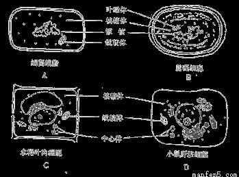 下列关于细胞结构与功能的叙述,错误的是