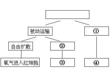 """细胞的结构与功能知识点 """"如下图所示的四个方框代表乳酸菌,衣藻,酵."""