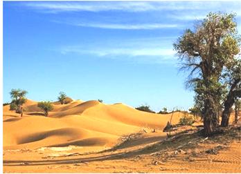 工作者在塔里木盆地面向东北方向拍摄到图示景观照片