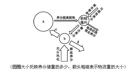 """读""""雨林生态系统的养分循环示意图"""",完成第8~10题."""