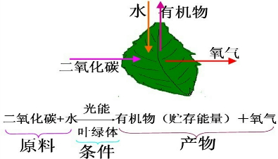 则此图可表示植物体的呼吸作用过程,此过程是在细胞内的线粒体中进行