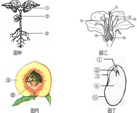 以下是绿色植物植株,花,果实,种子的示意图,请据图回答下列问题