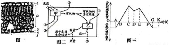 如图一表示叶片的结构示意图,图二表示某植物图一中