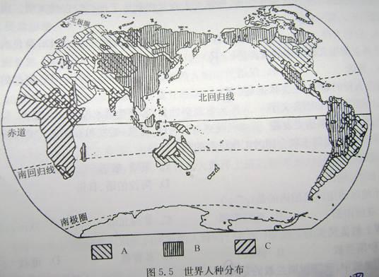 读世界人种分布图,完成下列问题