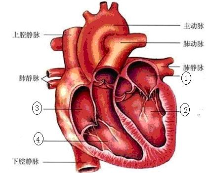 人体构成结构示意图_\