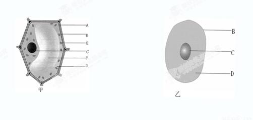 下图是植物细胞与动物细胞示意图