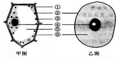 下图是植物细胞和动物细胞的结构示意图,据图回答问题
