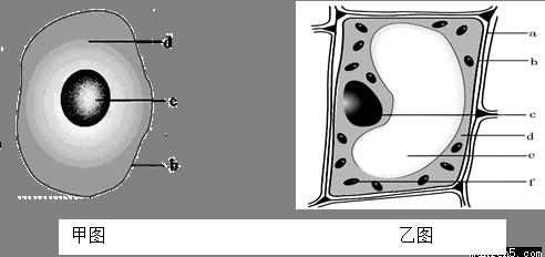 (2)动植物细胞都具有的结构是