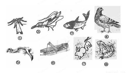 腔肠动物的主要特征是身体呈