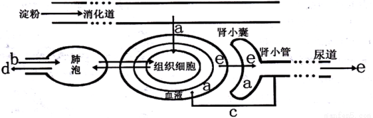 """""""下图是肾单位结构图,请据图回答问题(1).""""习题详情"""