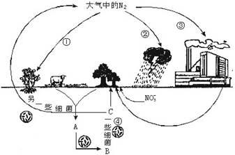 植物根的实验原理是什么_科学实验图片